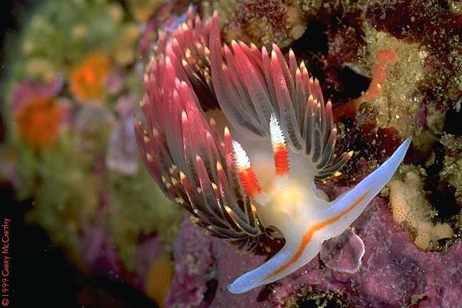Природа  Морская жизнь фото 13.